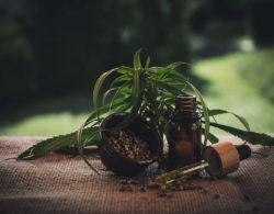 שמן CBD שאותו ממצים מצמח הקנאביס